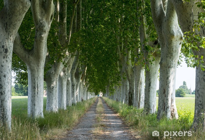 Country road in Provence Vinyl Wall Mural - Trees