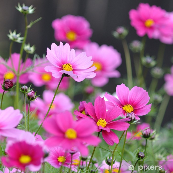 Naklejka Pixerstick Wiele pięknych kwiatów w polu - Kwiaty