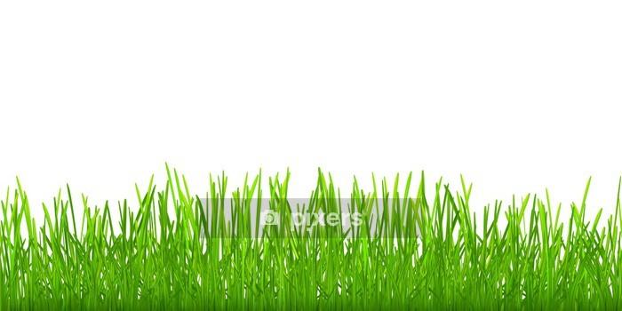 Sticker Mural Herbe Verte Transparente Pixers Nous Vivons Pour
