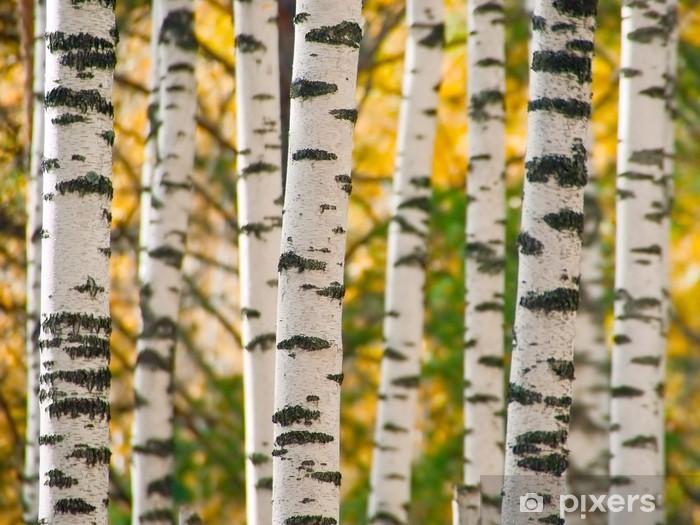 Trunks of birchwood Self-Adhesive Wall Mural - Themes