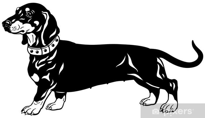 dachshund black white Pixerstick Sticker - Mammals