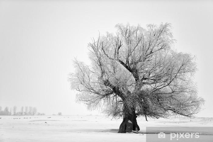 Naklejka Pixerstick Piękne drzewo w zimie w lutym 2014 roku w Rumunii - Tematy
