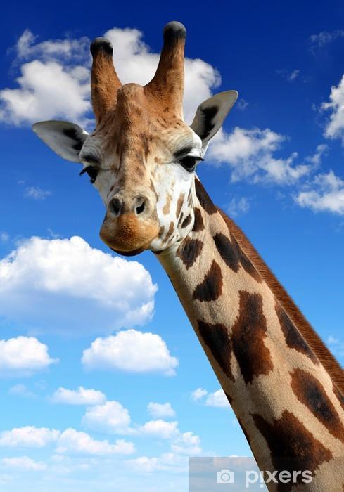 Fototapeta winylowa Żyrafa - Tematy
