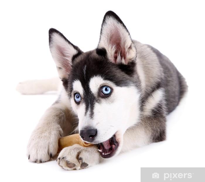 Nálepka Pixerstick Krásný roztomilý husky štěně, izolovaných na bílém - Psi