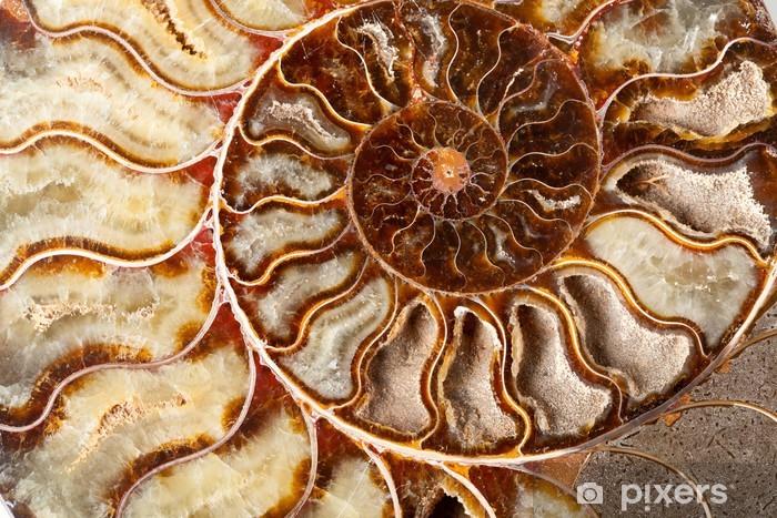 Zelfklevend Fotobehang Mooie ammoniet minerale - Texturen