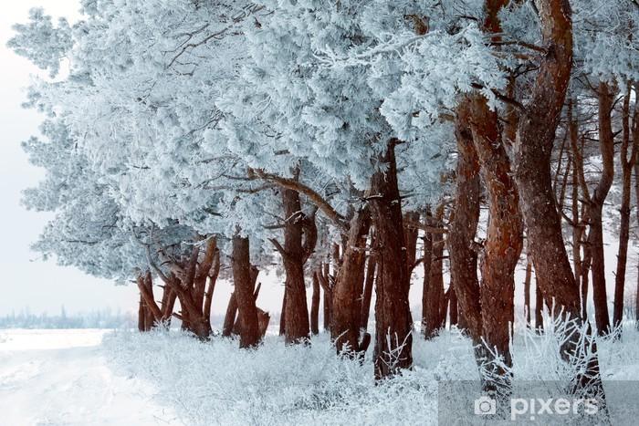 Fiocchi Di Neve Di Carta Modelli : Carta da parati foresta di inverno con gelo sugli alberi e fiocchi