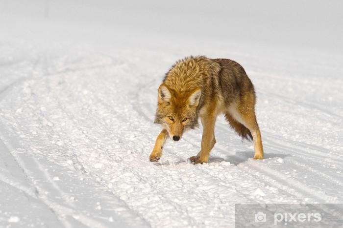 Wile coyote e bip bip favole e fantasia