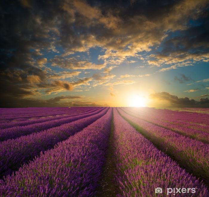 Poster Vibrant Coucher de soleil sur la lavande champ paysage - Thèmes