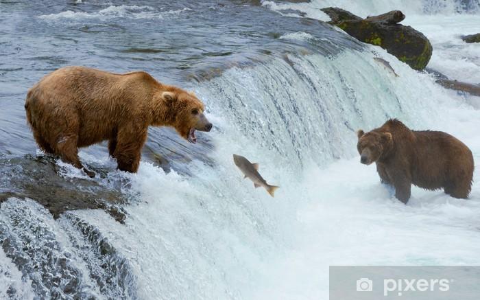 Sticker Pixerstick Un brun grizzly saumon chasse à l'ours à la rivière, Alaska, Katmai - Thèmes