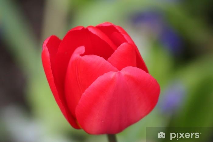 Papier peint vinyle Tulipe - Fleurs