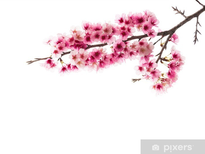 Vinilo Pixerstick Sakura Cherry Blossom - Flores