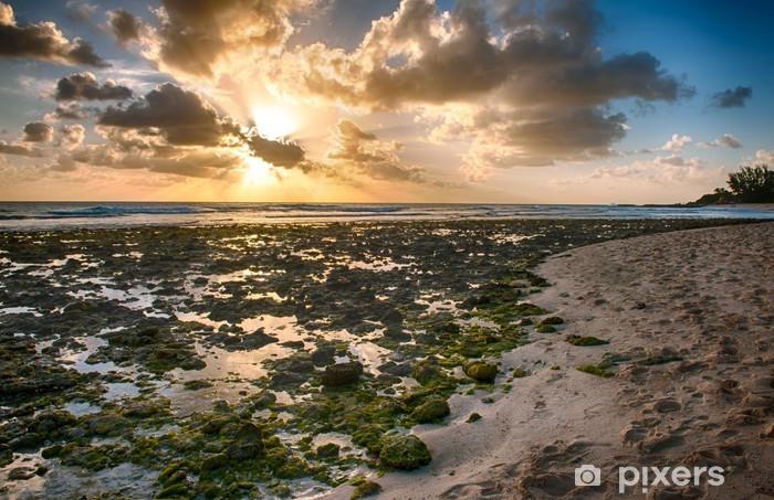 Vinylová fototapeta Barbados - Vinylová fototapeta