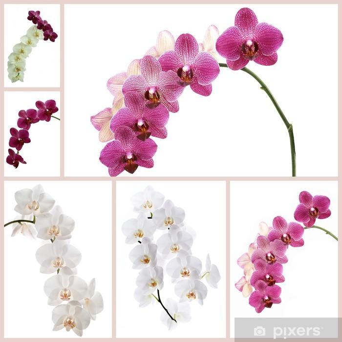 Poster Orchidées de fleurs - Fleurs