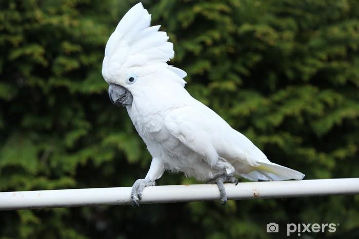 white bird parrot cockatoo Pixerstick Sticker - Themes