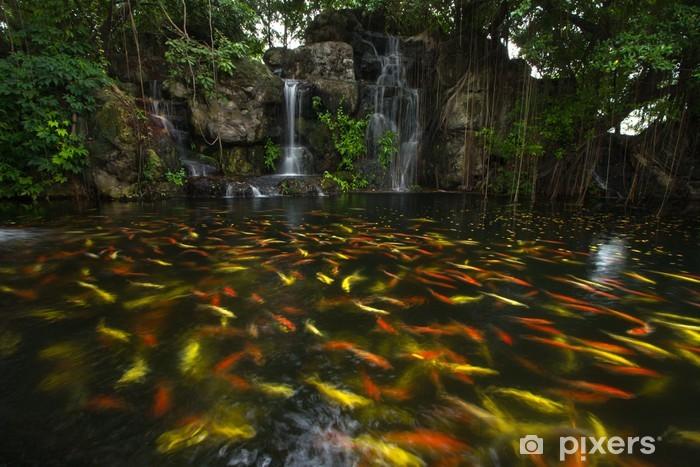 Waterval In Tuin : Fotobehang koi vissen in de vijver in de tuin met een waterval