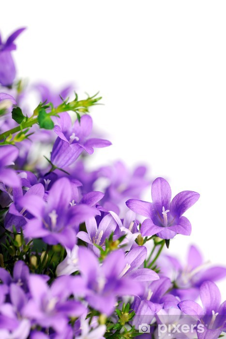 bluebells Lack Table Veneer - International Celebrations