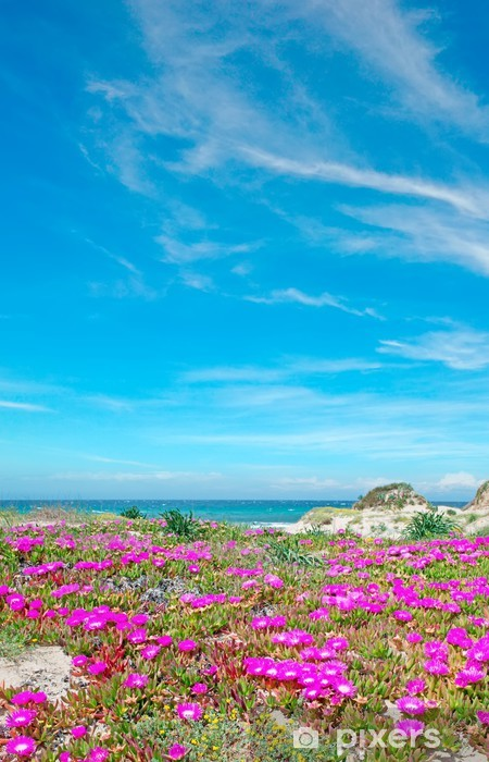 flowers in Platamona beach Vinyl Wall Mural - Europe
