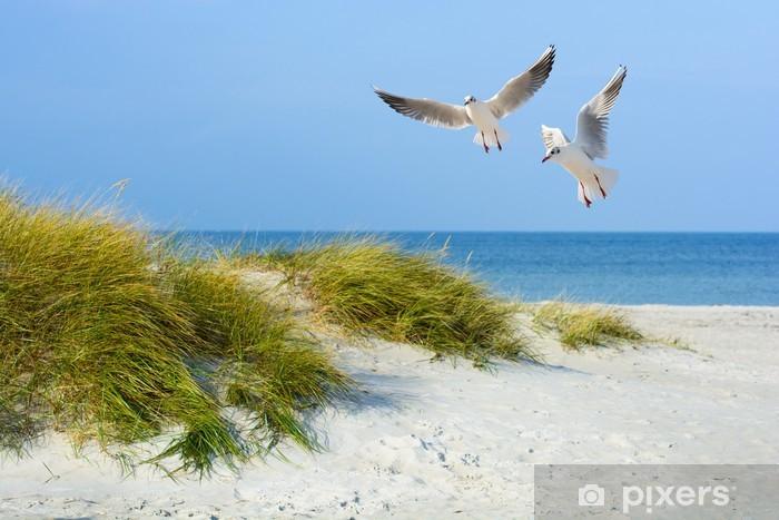 Fototapeta winylowa Mewy na piaszczystej plaży - Morze i ocean