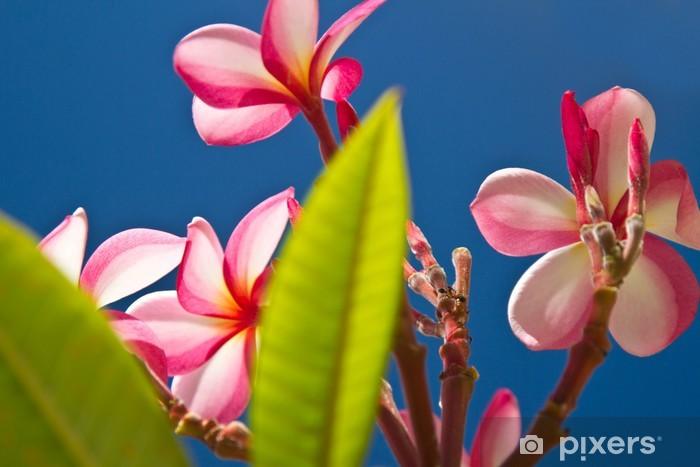 Nálepka Pixerstick Žluté a růžové, květy na stromě v Koh Ngai ostrov Thajska - Květiny
