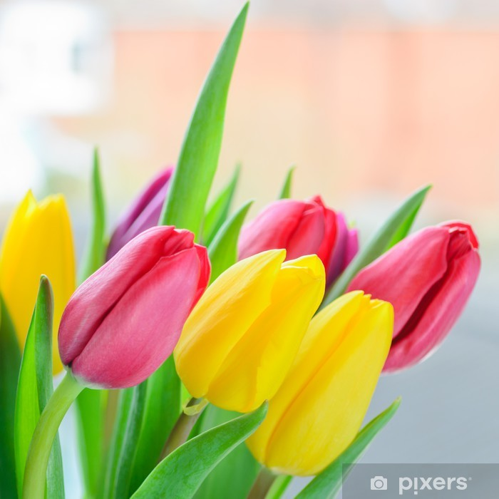 Fototapeta winylowa Multi kolorowe tulipany - Tematy