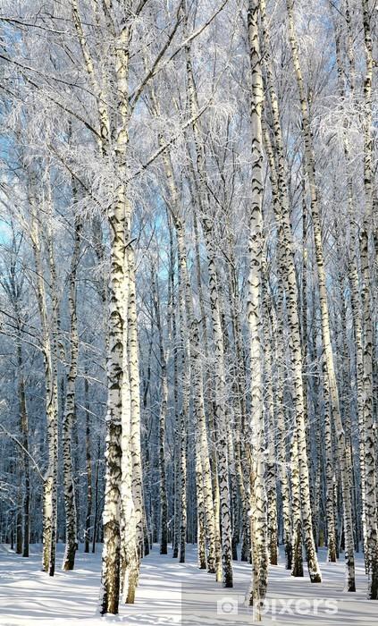 Fototapete Winter Birken Im Sonnenlicht Pixers Wir Leben Um Zu