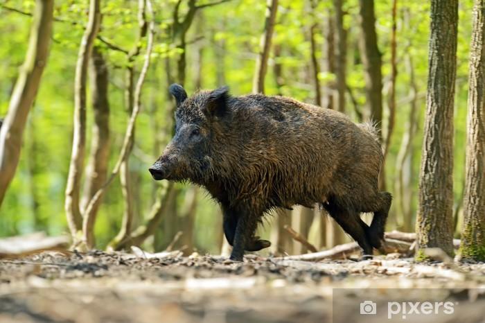 Sticker Pixerstick Wild boar - Mammifères