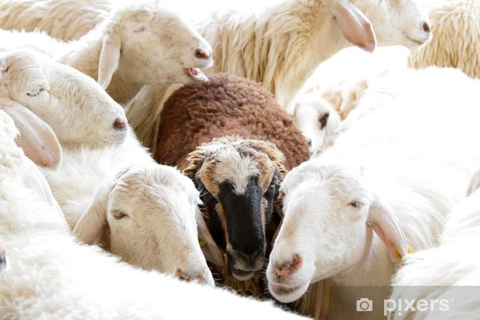 Fototapeta winylowa Czarna owca w grupie - Tematy