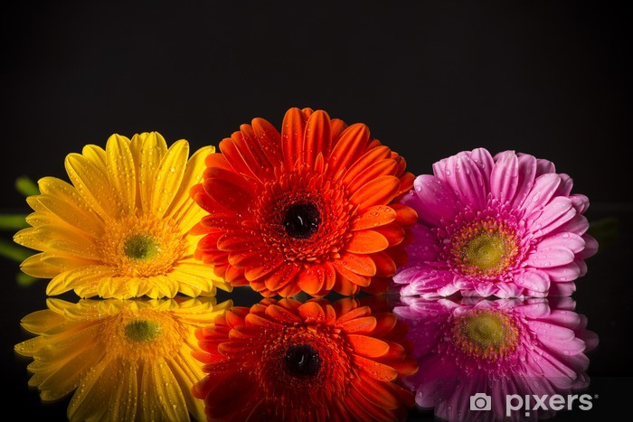 Colored gerber flower Pixerstick Sticker - Imaginary Animals