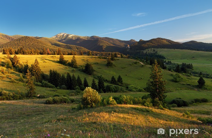 Papier peint vinyle Paysage avec prairie et forêt - Montagne