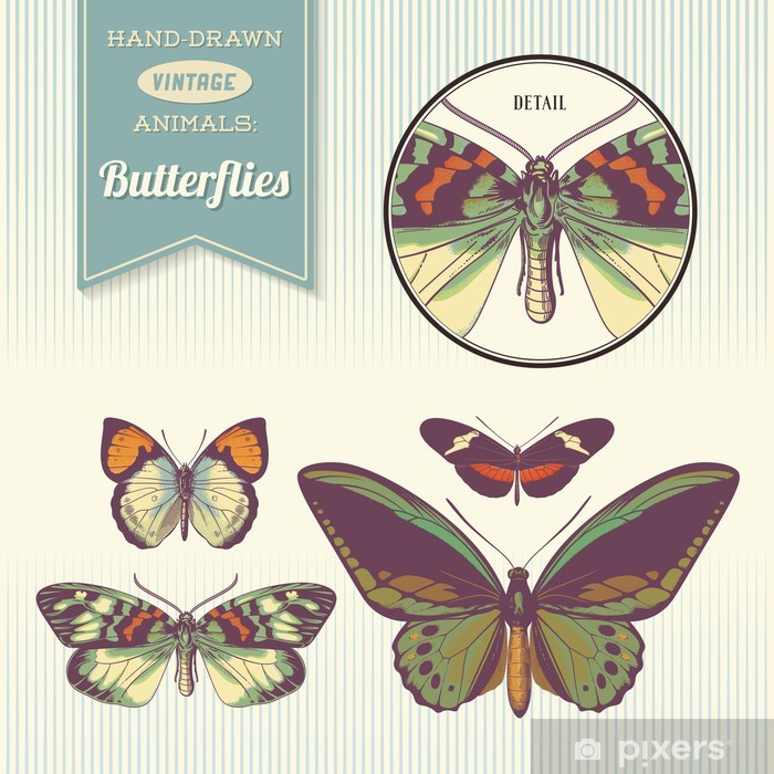 hand-drawn vintage butterfly illustrations Vinyl Wall Mural - Other Other