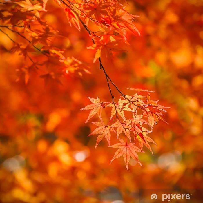 Poster Rote Ahornblätter im Herbst - Asien