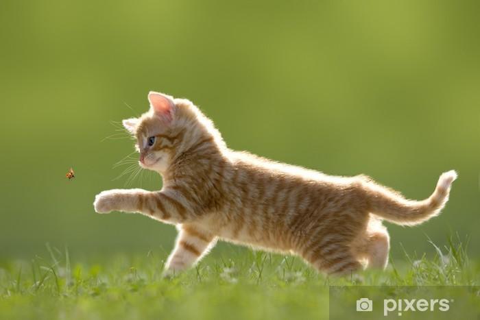 Fotomural Estándar Junge Katze mit mariquitas, grüner auf Wiese - Temas