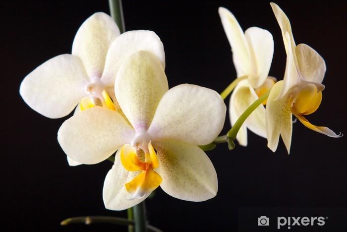 Vinilo Pixerstick Orquídeas en negro - Temas