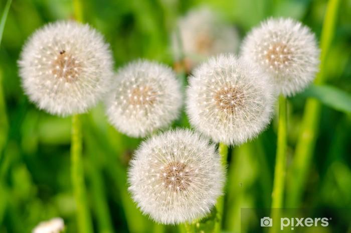 Pixerstick Aufkleber Löwenzahn - Blumen