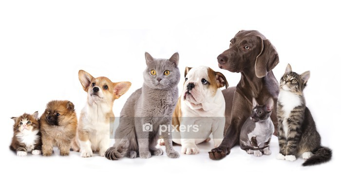 Group of cats and dogs in white background, cat and dog Wall Decal - Wall decals