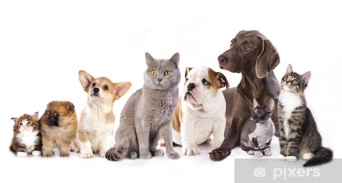 Fototapeta winylowa Grupa kotów i psów w białym tle, kotów i psów - Naklejki na ścianę