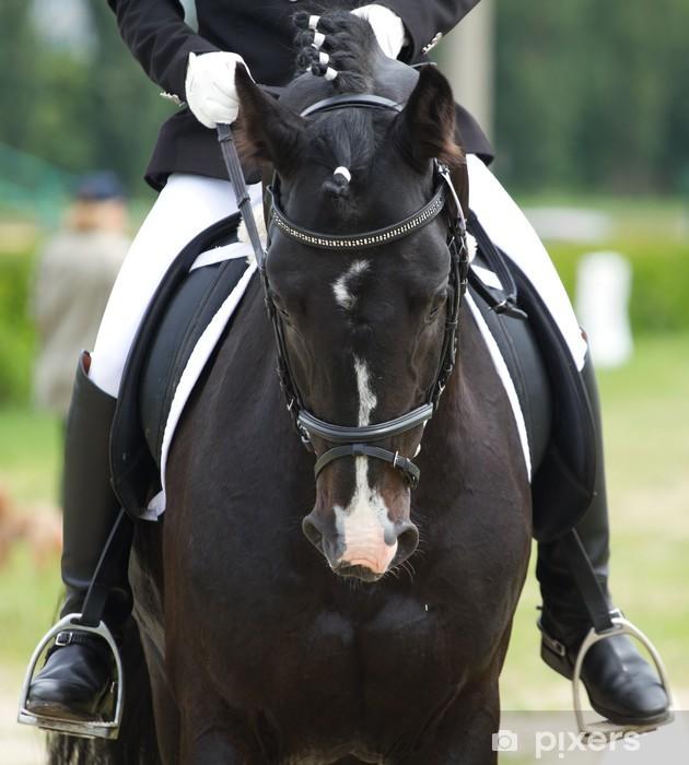 Mural de Parede em Vinil dressage horse and rider - Desportos Individuais