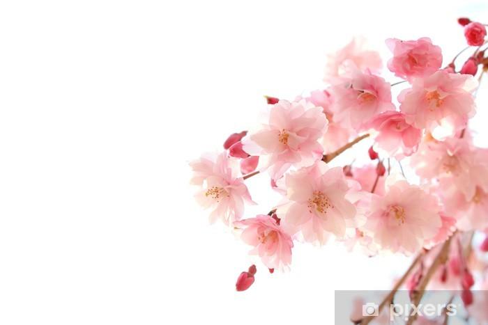 枝垂れ桜 Vinyl Wall Mural - Flowers