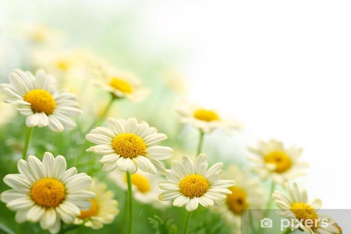 Fototapeta winylowa Kwiat stokrotka- - Style