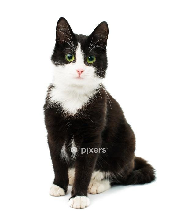 Muursticker Zwart-witte kat - Thema's