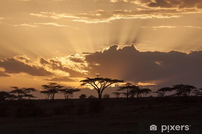 Vinyl Fotobehang Afrikaanse zonsondergang met acacia en vogel - Thema's