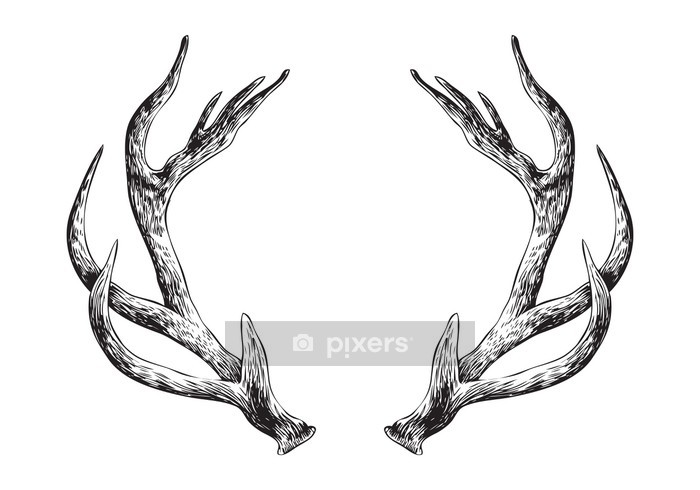 Deer Antlers Wall Decal - Other Other