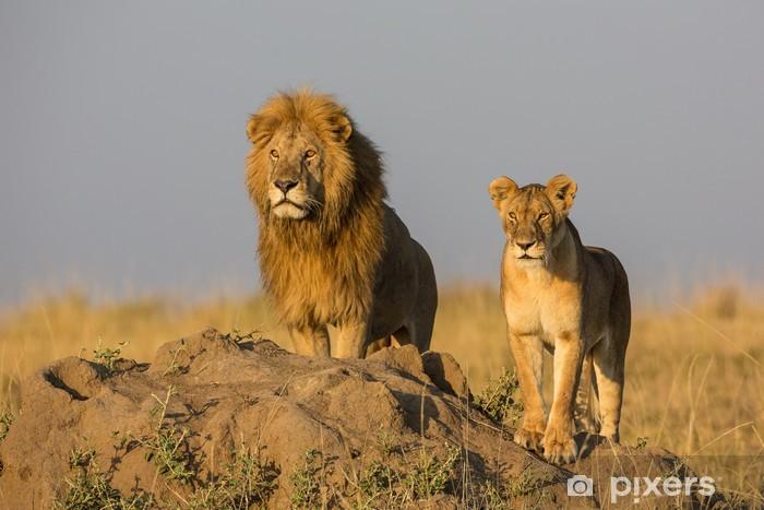 Vinilo Pixerstick Löwenpaar en África - Temas