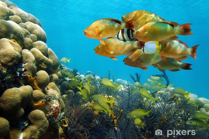 Nálepka Pixerstick Hejno barevných tropických ryb v korálovém útesu - Témata