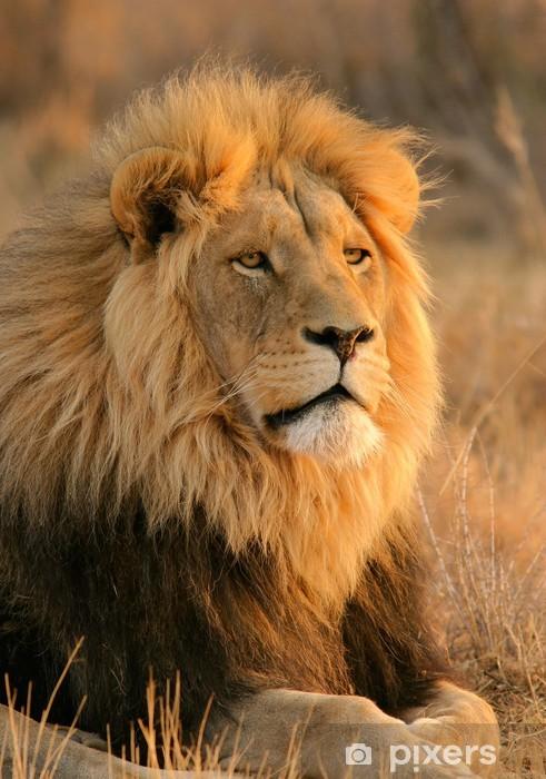 Naklejka Pixerstick Duży samiec lwa - Tematy