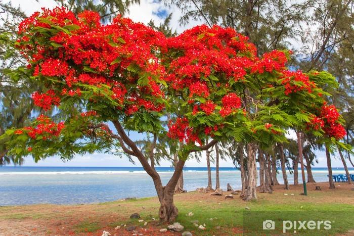 arbre flamboyant, Saint-Leu, île de la Réunion Vinyl Wall Mural - iStaging