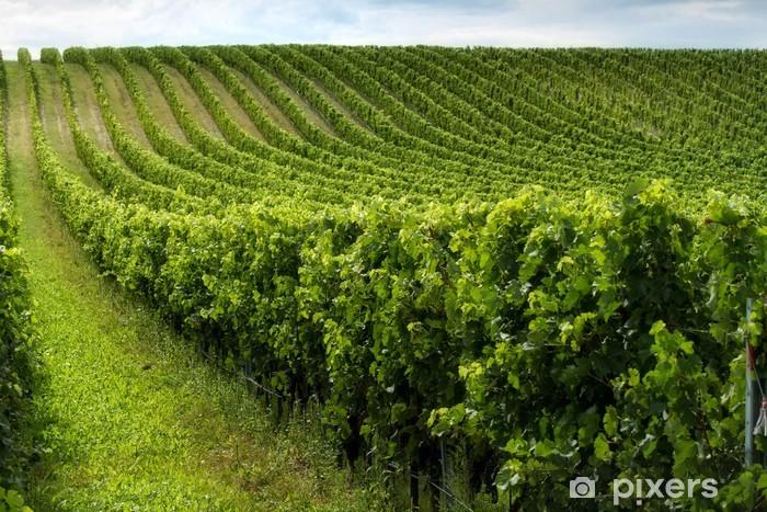 Carta da parati bella filari di uva pixers viviamo for Carta parati vinile