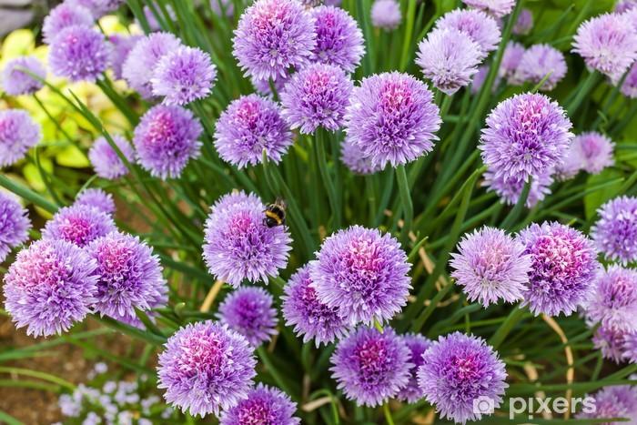 Naklejka Pixerstick Chive flowers - Kwiaty