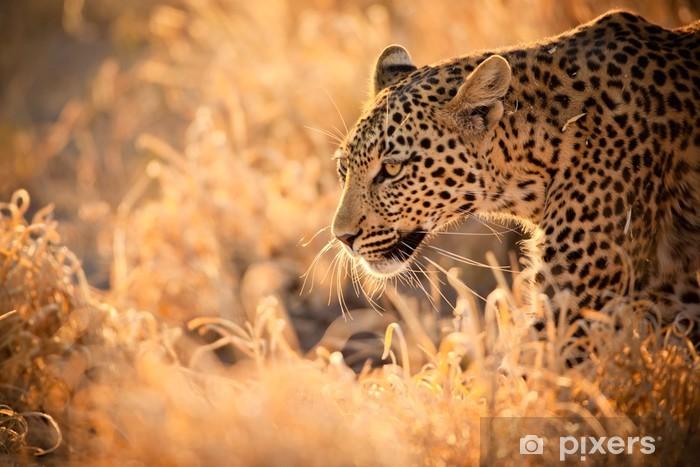 Fototapeta winylowa Leopard Zwiedzanie o zachodzie słońca - Afryka