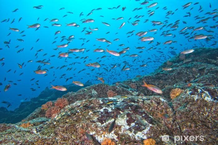 Naklejka Pixerstick Czerwone ryby na rafie na ciemnoniebieskie oceanem - Tematy